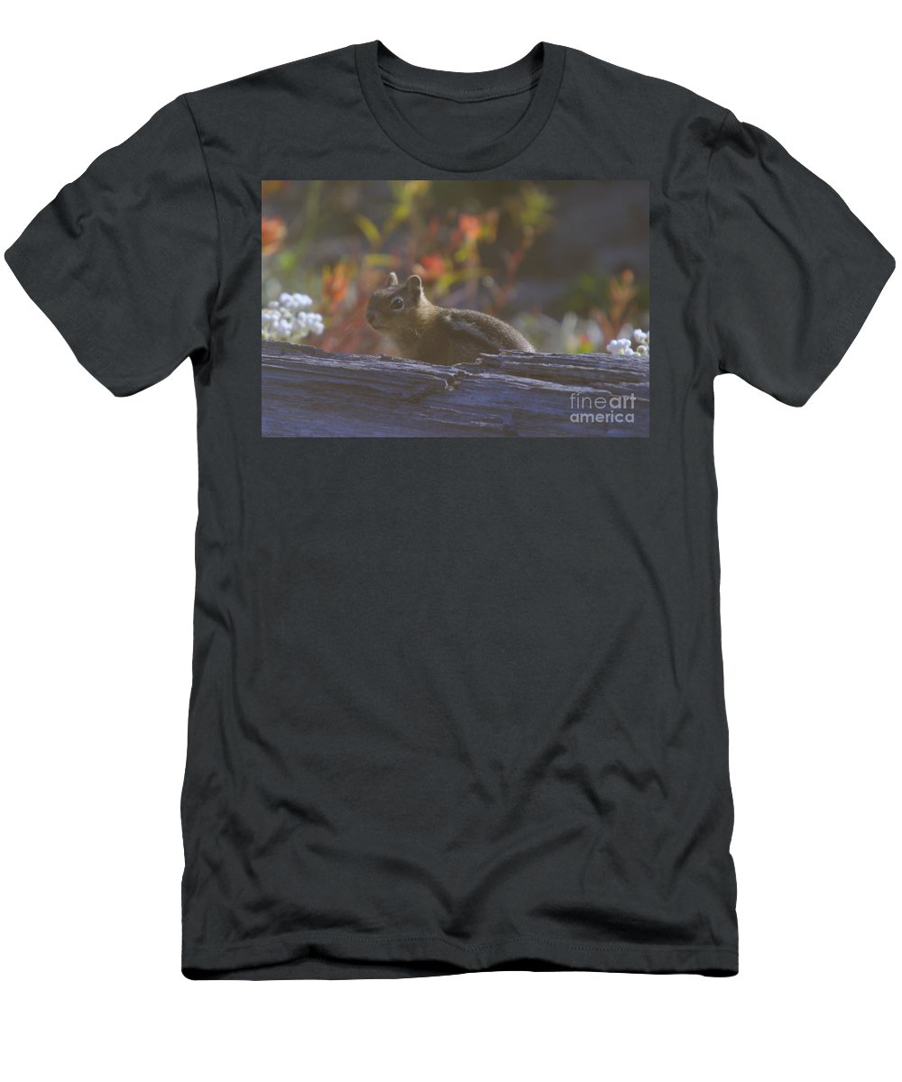 Chipmunks Men's T-Shirt (Athletic Fit) featuring the photograph A Little Chipmunk by Jeff Swan