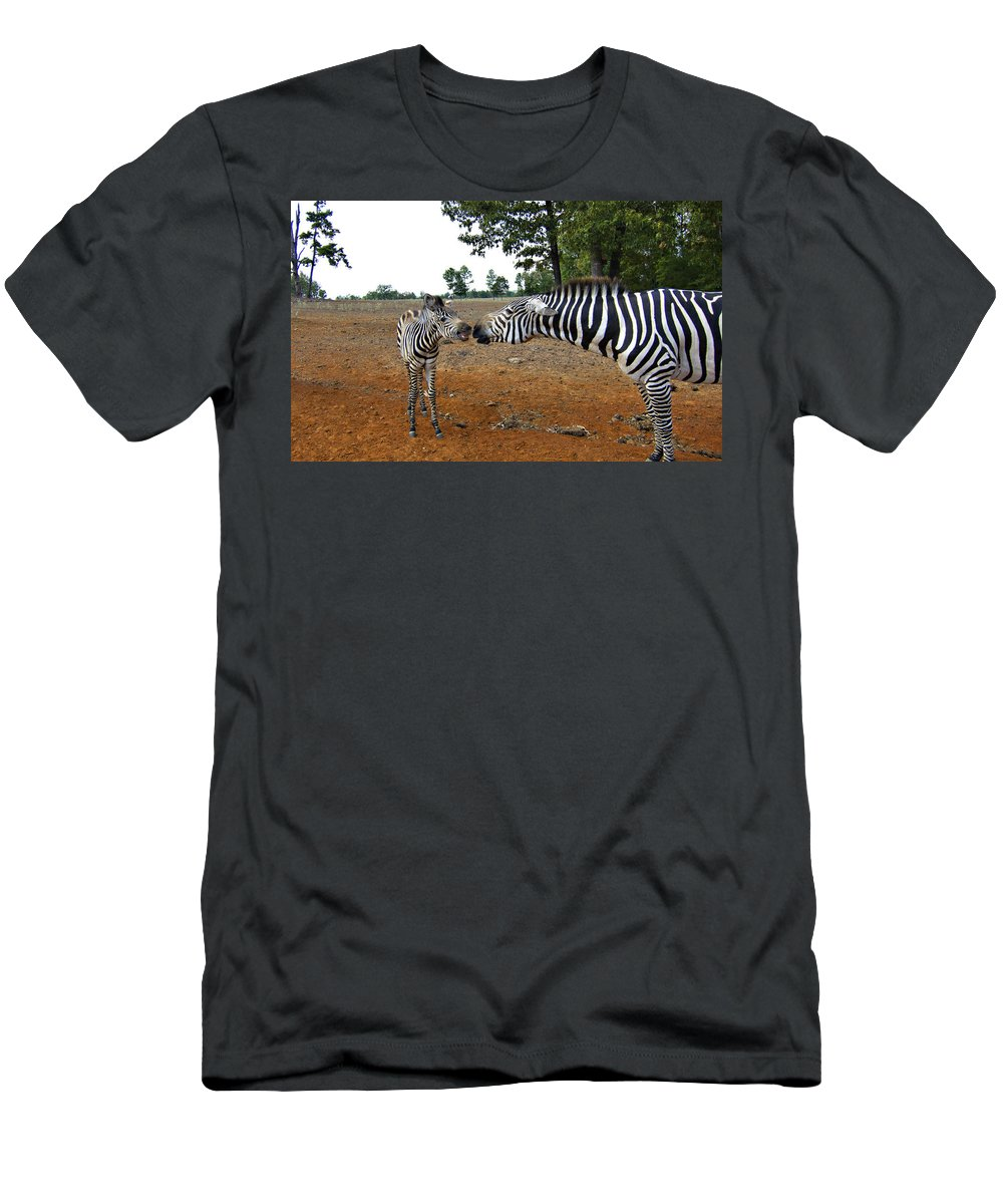 Zebras Men's T-Shirt (Athletic Fit) featuring the photograph Affectionate Mother by Douglas Barnard