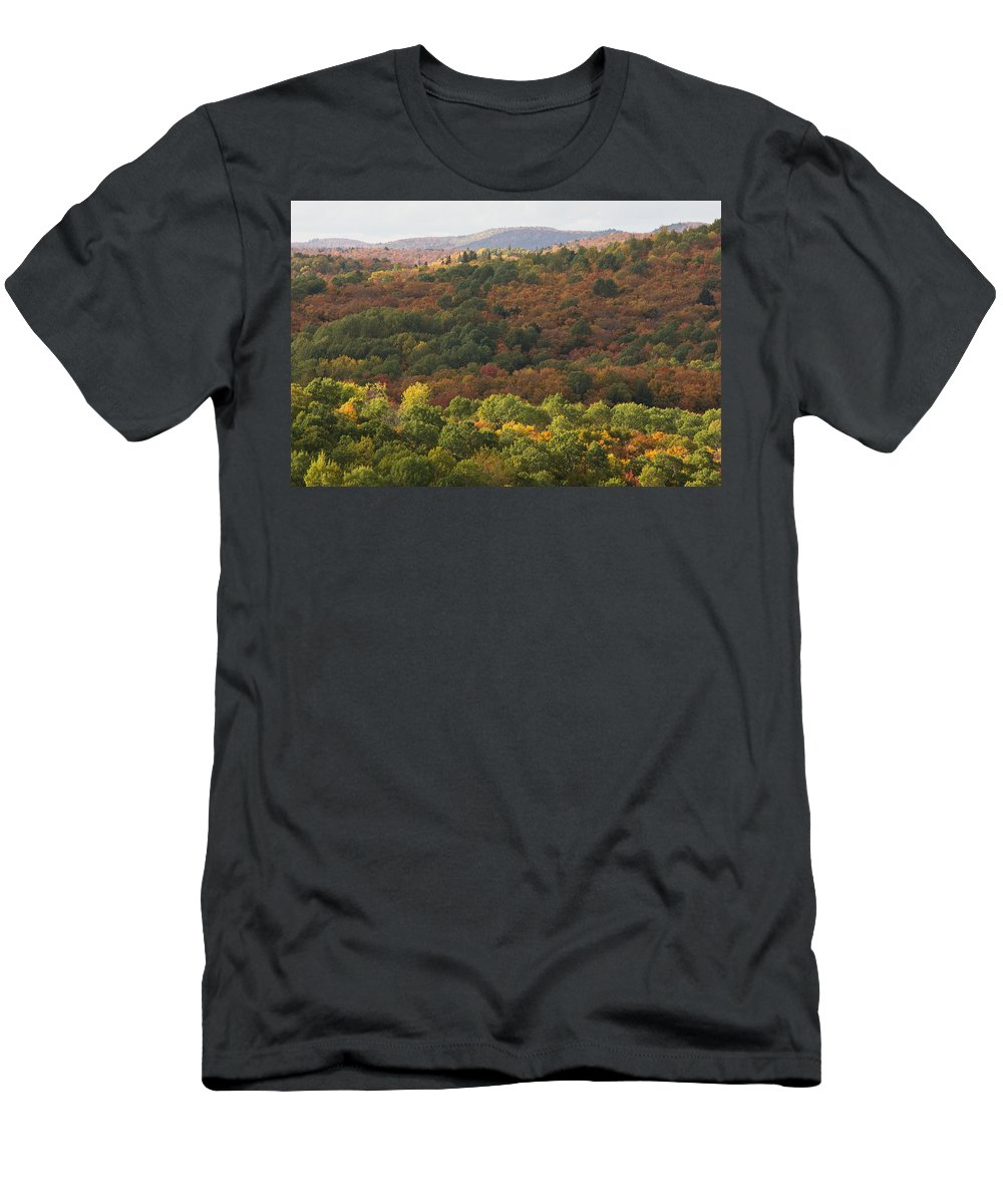 Fall Men's T-Shirt (Athletic Fit) featuring the photograph Algonquin In Autumn by Cale Best