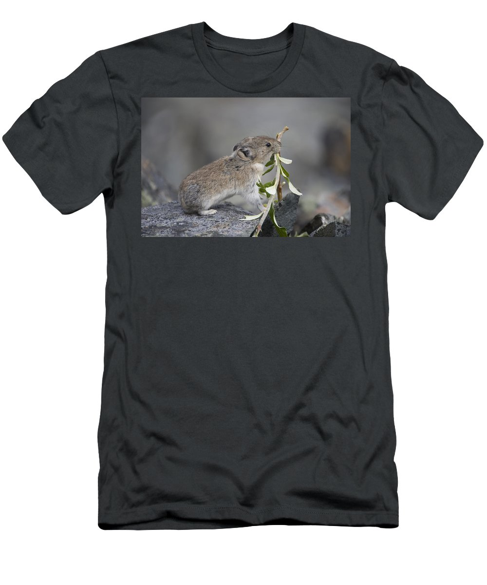 Mp T-Shirt featuring the photograph American Pika by Michael Quinton