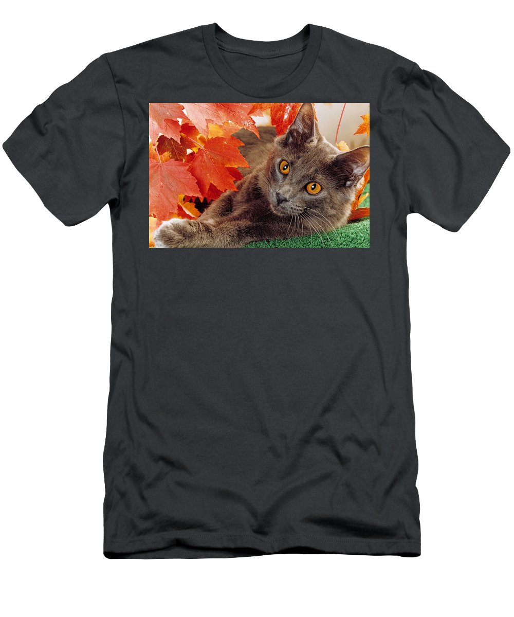 Domestic House Cat Men's T-Shirt (Athletic Fit) featuring the photograph Autumn Reds And Ambers by Larry Allan