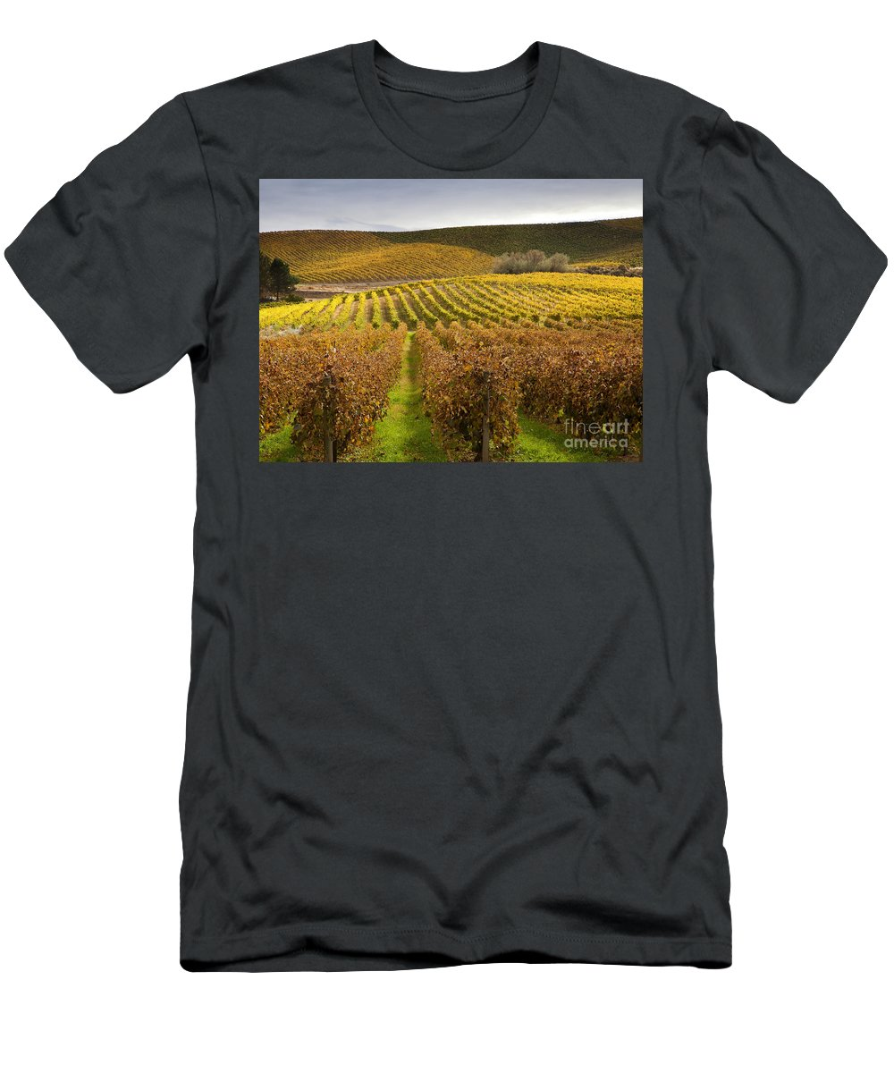 Grapevines Men's T-Shirt (Athletic Fit) featuring the photograph Autumn Vines by Mike Dawson