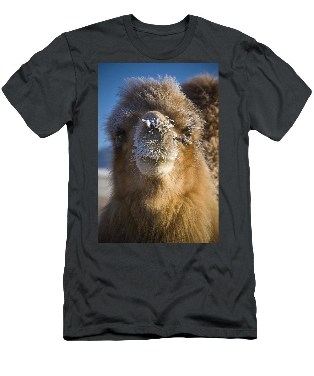 Animals Men's T-Shirt (Athletic Fit) featuring the photograph Bactrian Camel Camelus Bactrianus by David DuChemin