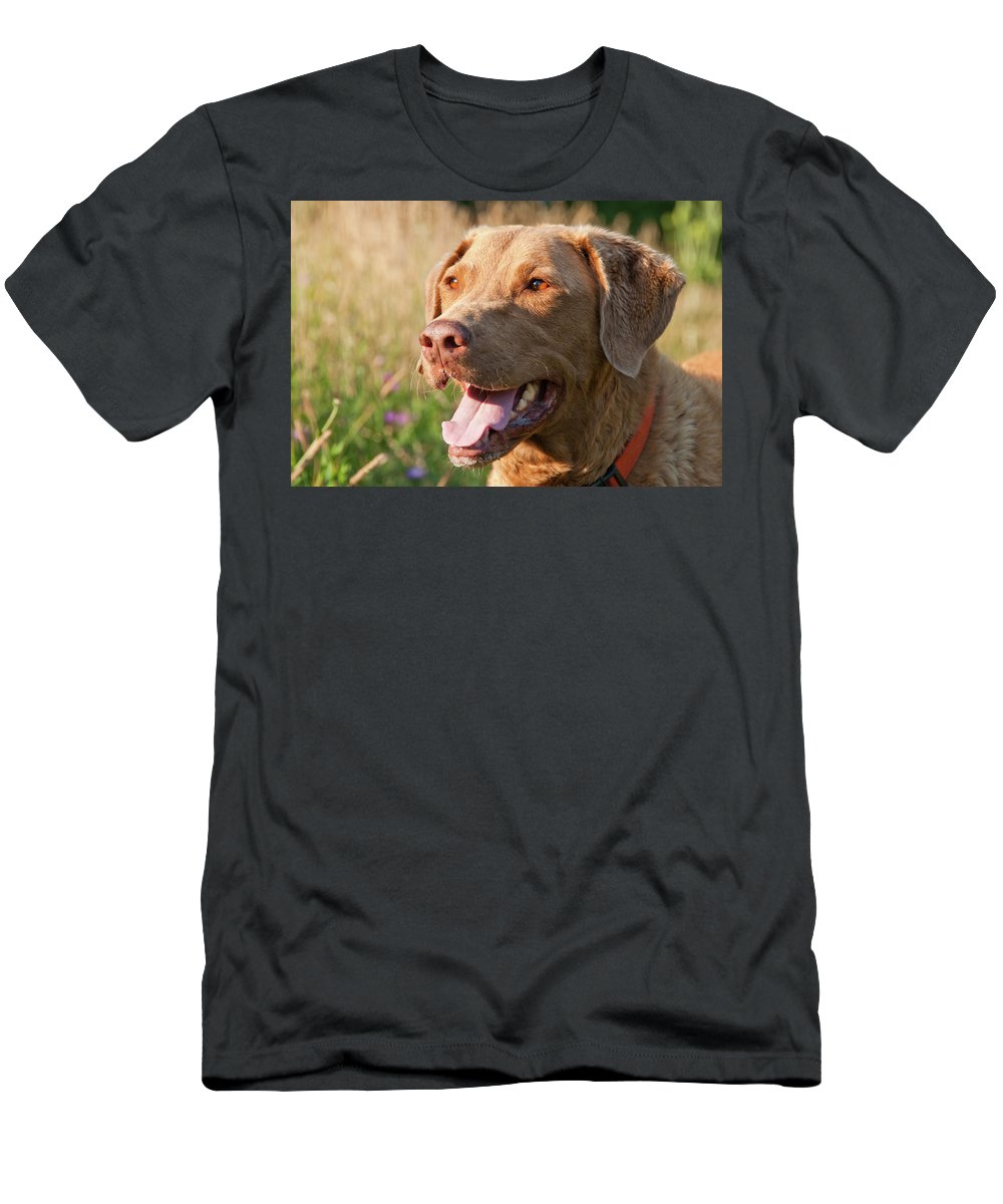 Dog Men's T-Shirt (Athletic Fit) featuring the photograph Bailee 1106 by Guy Whiteley