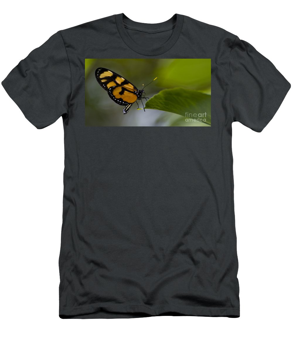 Butterfly Men's T-Shirt (Athletic Fit) featuring the photograph Balancing Act by Heather Applegate