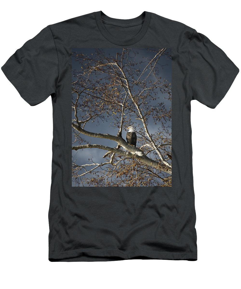 Animal Men's T-Shirt (Athletic Fit) featuring the photograph Bald Eagle In A Tree by Con Tanasiuk
