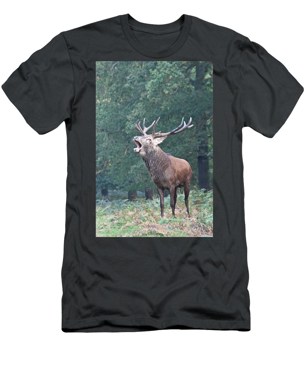 Stag Men's T-Shirt (Athletic Fit) featuring the photograph Bellowing Red Deer Stag by Dawn OConnor
