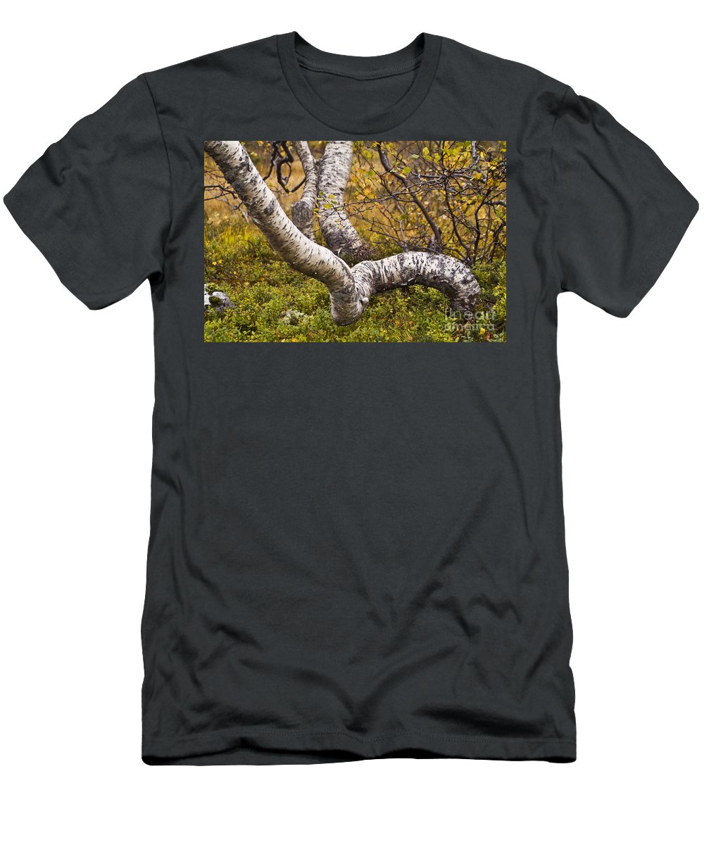 Tree Men's T-Shirt (Athletic Fit) featuring the photograph Birch Trees In Autumn Foliage by Heiko Koehrer-Wagner