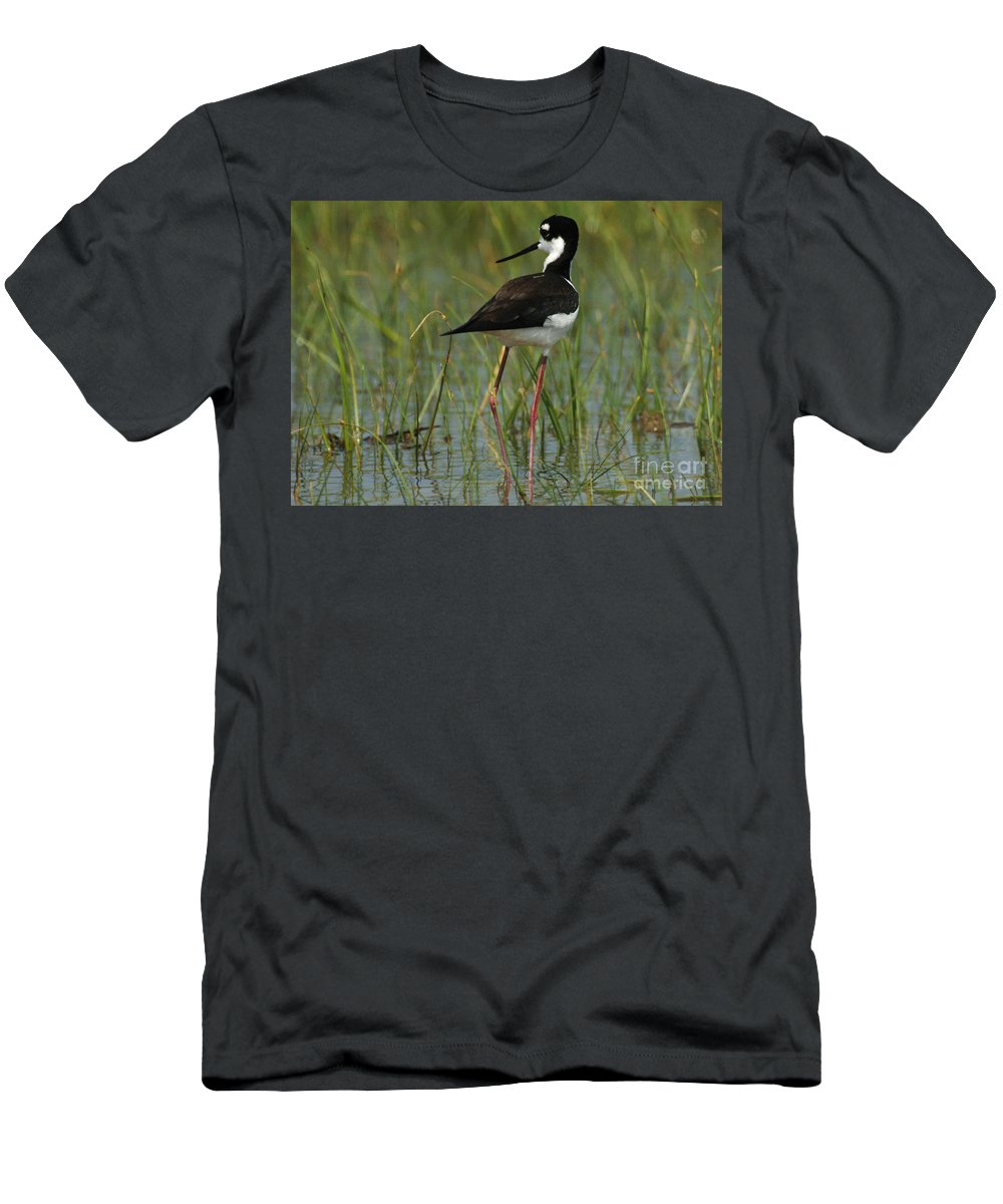 Bird Men's T-Shirt (Athletic Fit) featuring the photograph Black And White Stilt by Bob Christopher