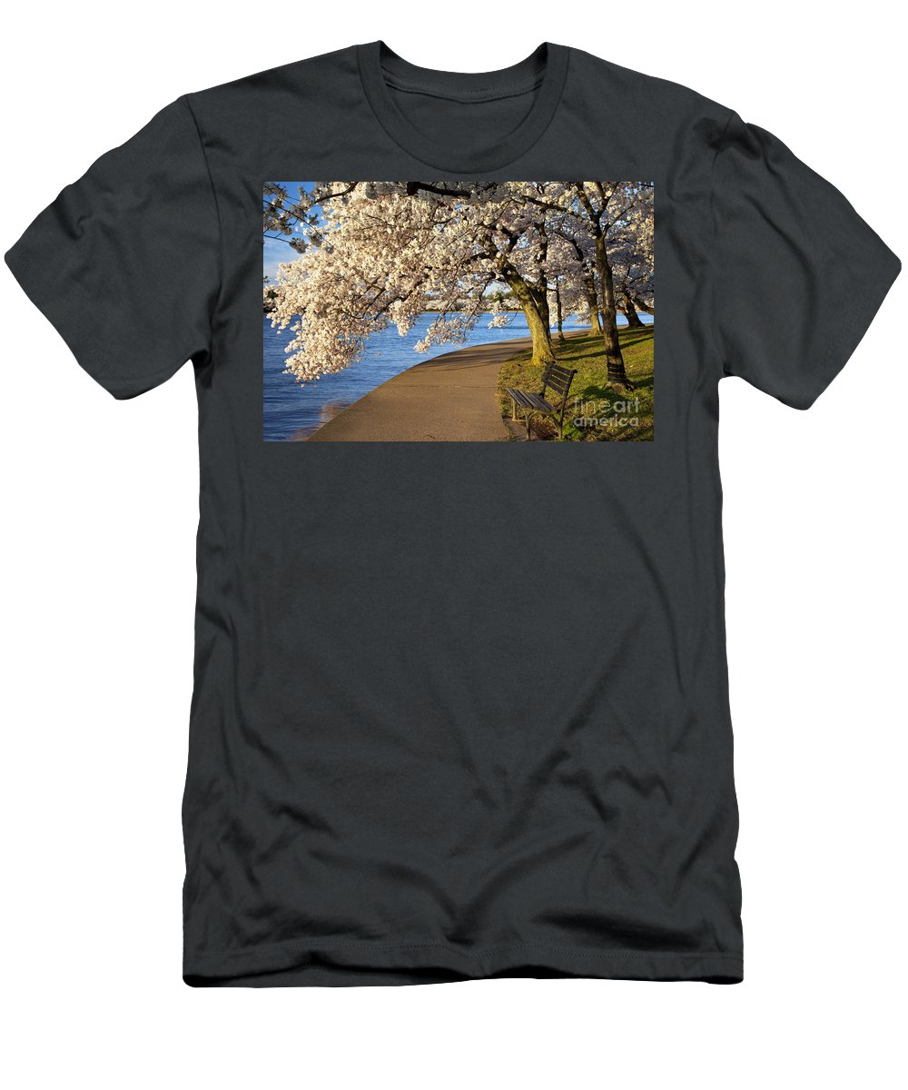 Cherry Blossom Men's T-Shirt (Athletic Fit) featuring the photograph Blossoming Cherry Trees by Brian Jannsen