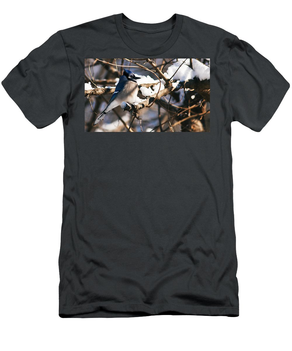 Heron Haven Men's T-Shirt (Athletic Fit) featuring the photograph Blue Jay Staying Warm by Edward Peterson