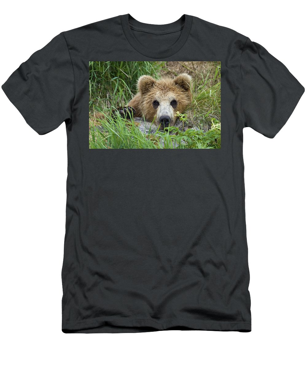 00782025 T-Shirt featuring the photograph Brown Bear Cub, Kamchatka by Sergey Gorshkov