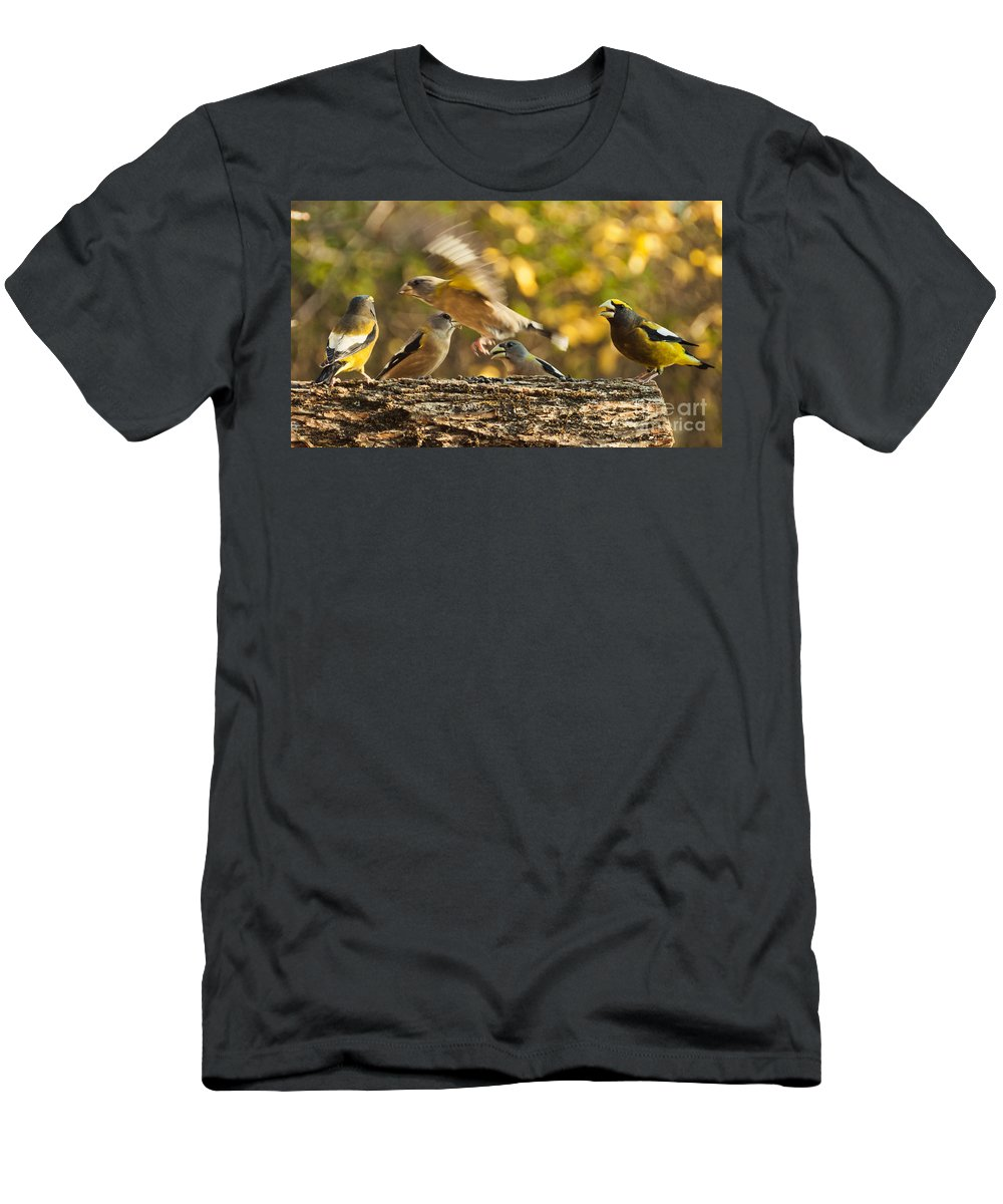 Grosbeak Men's T-Shirt (Athletic Fit) featuring the photograph Busy Birds by Cheryl Baxter
