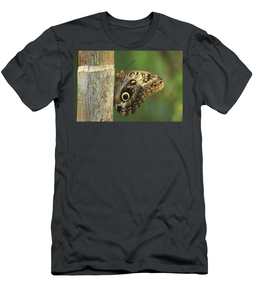 Design Men's T-Shirt (Athletic Fit) featuring the photograph Butterfly by Bilderbuch