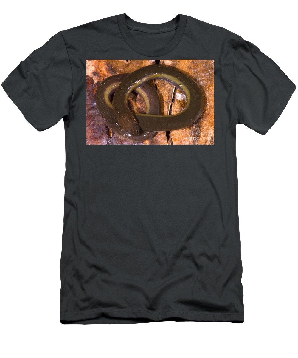 Ichthyophiidae Men's T-Shirt (Athletic Fit) featuring the photograph Caudacaecilia Asplenia by Dante Fenolio