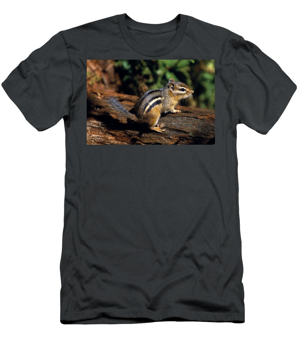 Outdoors Men's T-Shirt (Athletic Fit) featuring the photograph Chipmunk On A Log by Natural Selection Bill Byrne