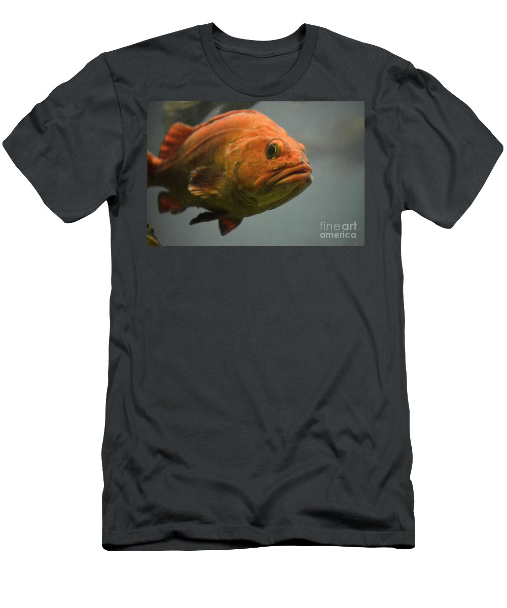Undersea Gardens Men's T-Shirt (Athletic Fit) featuring the photograph Close And Fishy by Traci Cottingham