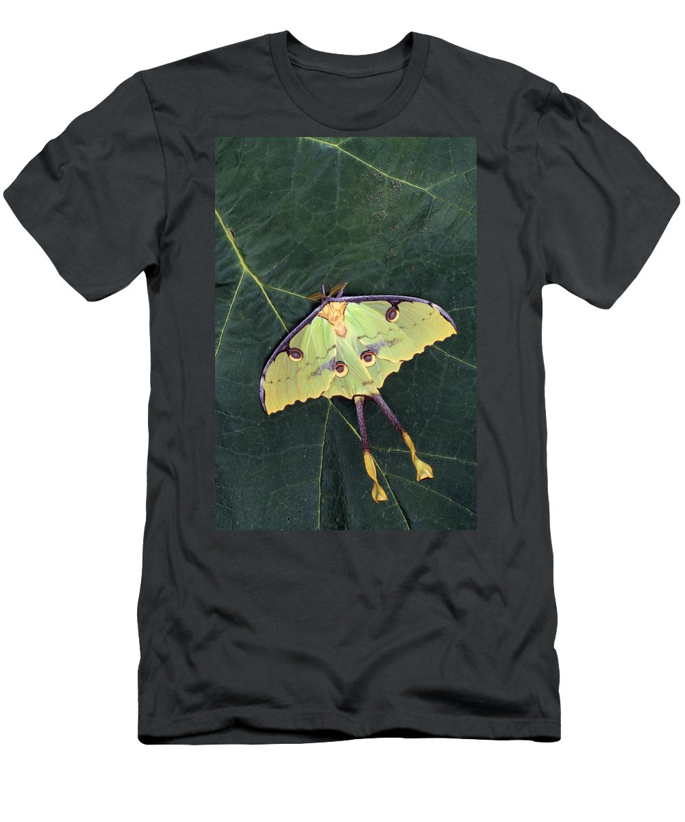 Animal Men's T-Shirt (Athletic Fit) featuring the photograph Closeup Of Unique Butterfly by Natural Selection Jeff Lepore