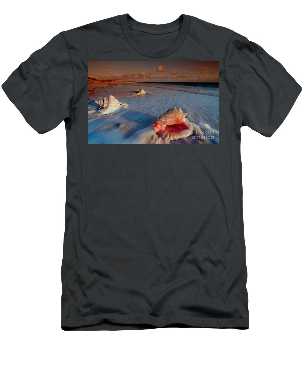 Ashore Men's T-Shirt (Athletic Fit) featuring the photograph Conch Shell On Beach by Novastock and Photo Researchers