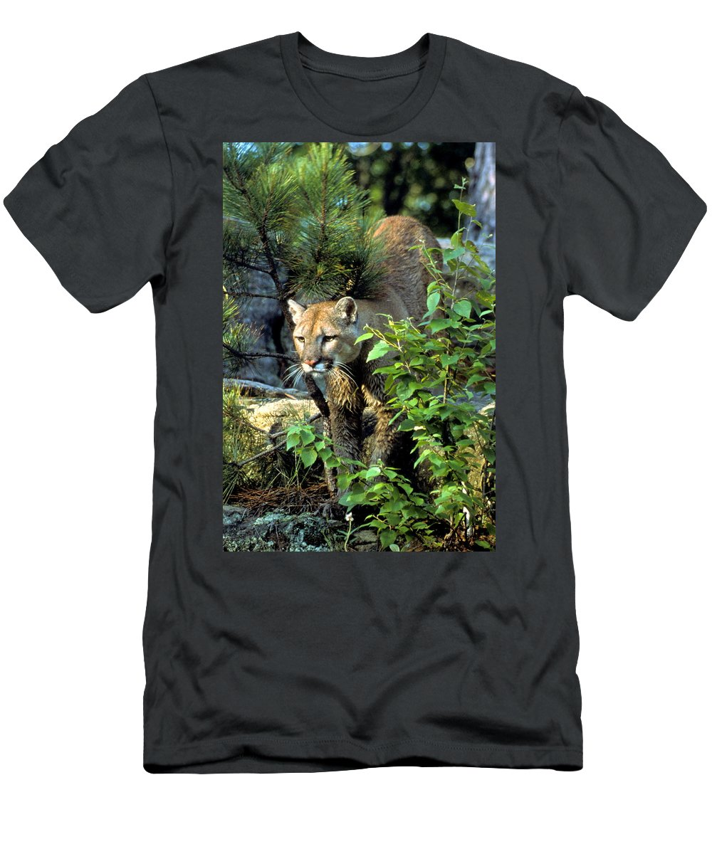 Cougar Men's T-Shirt (Athletic Fit) featuring the photograph Cougar Coming Through by Larry Allan