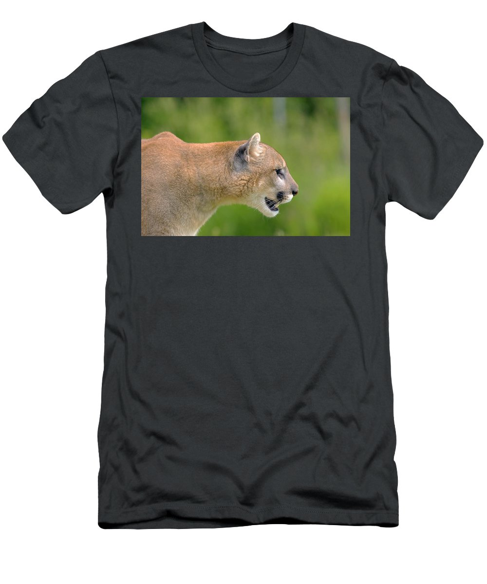 Outdoors Men's T-Shirt (Athletic Fit) featuring the photograph Cougar Profile by John Pitcher