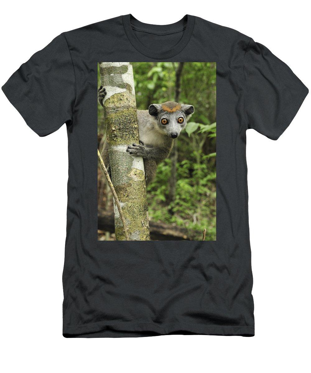 Mp T-Shirt featuring the photograph Crowned Lemur Eulemur Coronatus Female by Thomas Marent