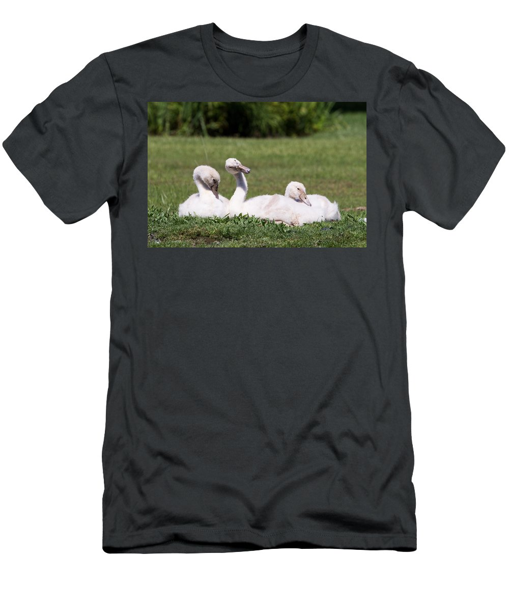 Cygnets Men's T-Shirt (Athletic Fit) featuring the photograph Cygnets by Stephanie McDowell