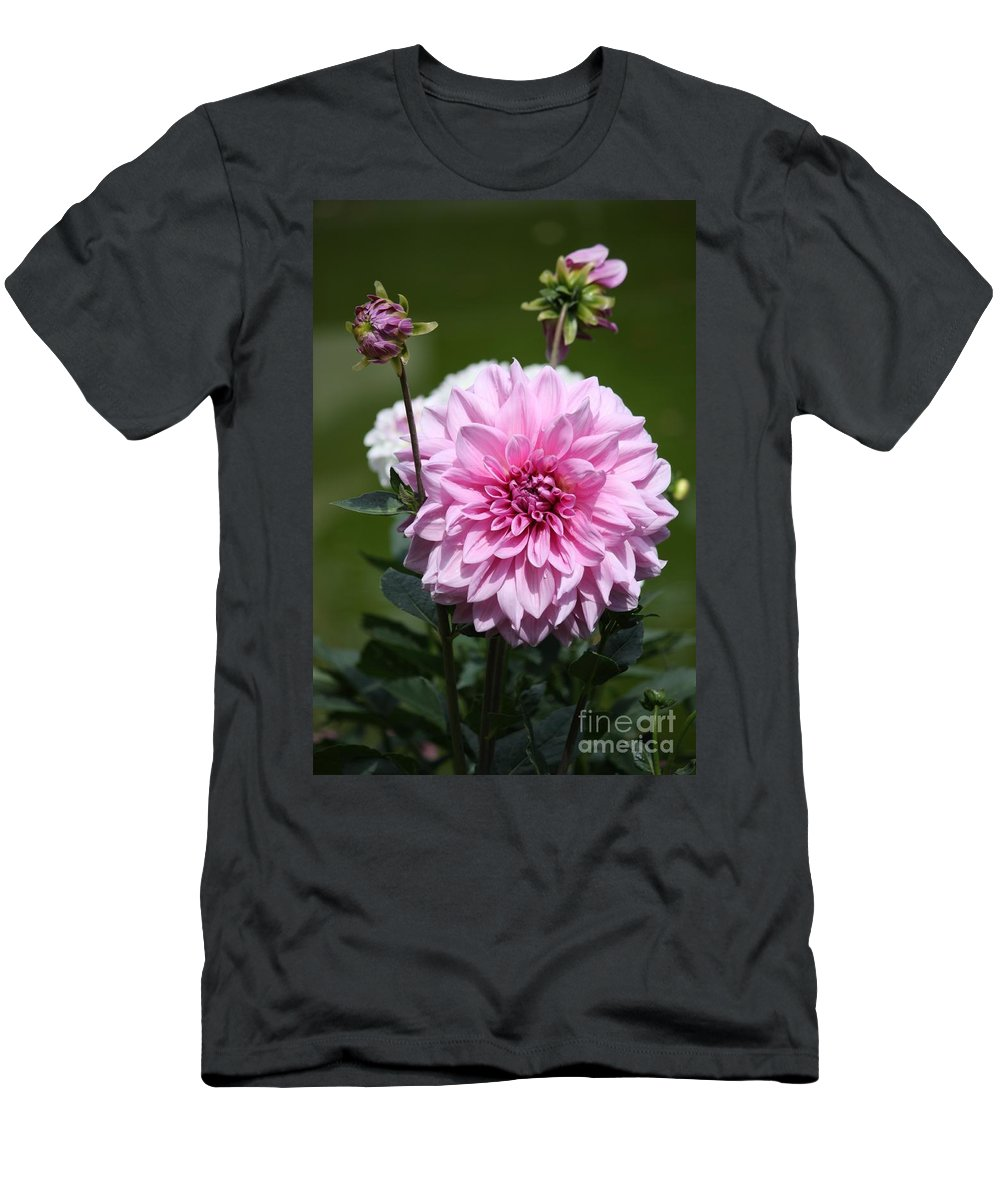 Pink Dahlia Men's T-Shirt (Athletic Fit) featuring the photograph Dahlia Standout by Carol Groenen