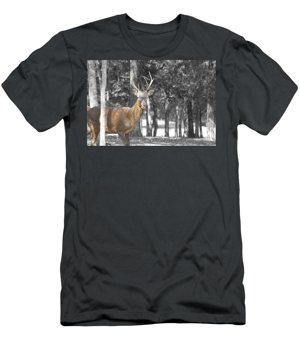Deer Men's T-Shirt (Athletic Fit) featuring the photograph Deer In The Forest by Douglas Barnard
