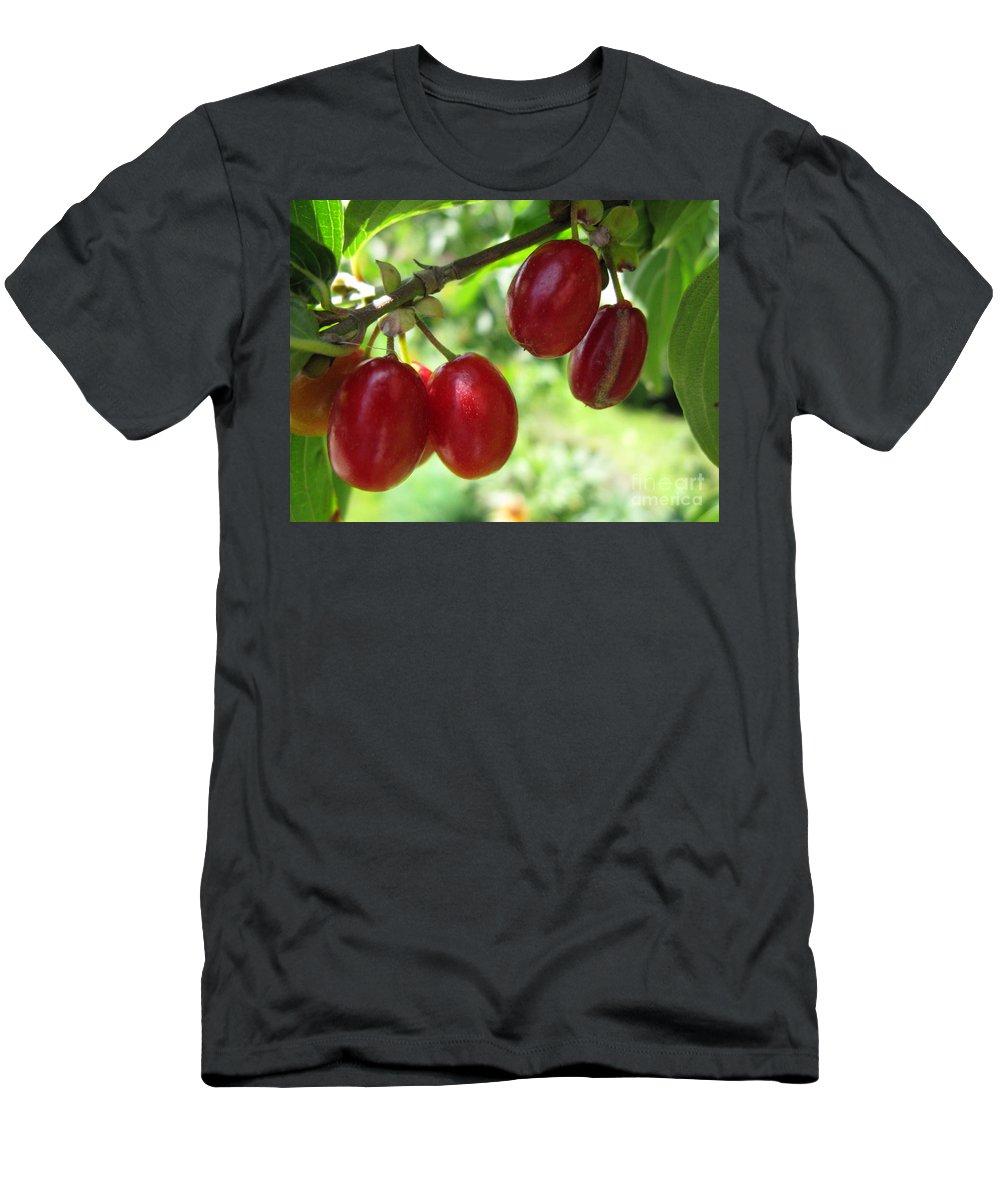 Garden Men's T-Shirt (Athletic Fit) featuring the photograph Dogwood Cornus Mas Berries by Ausra Huntington nee Paulauskaite