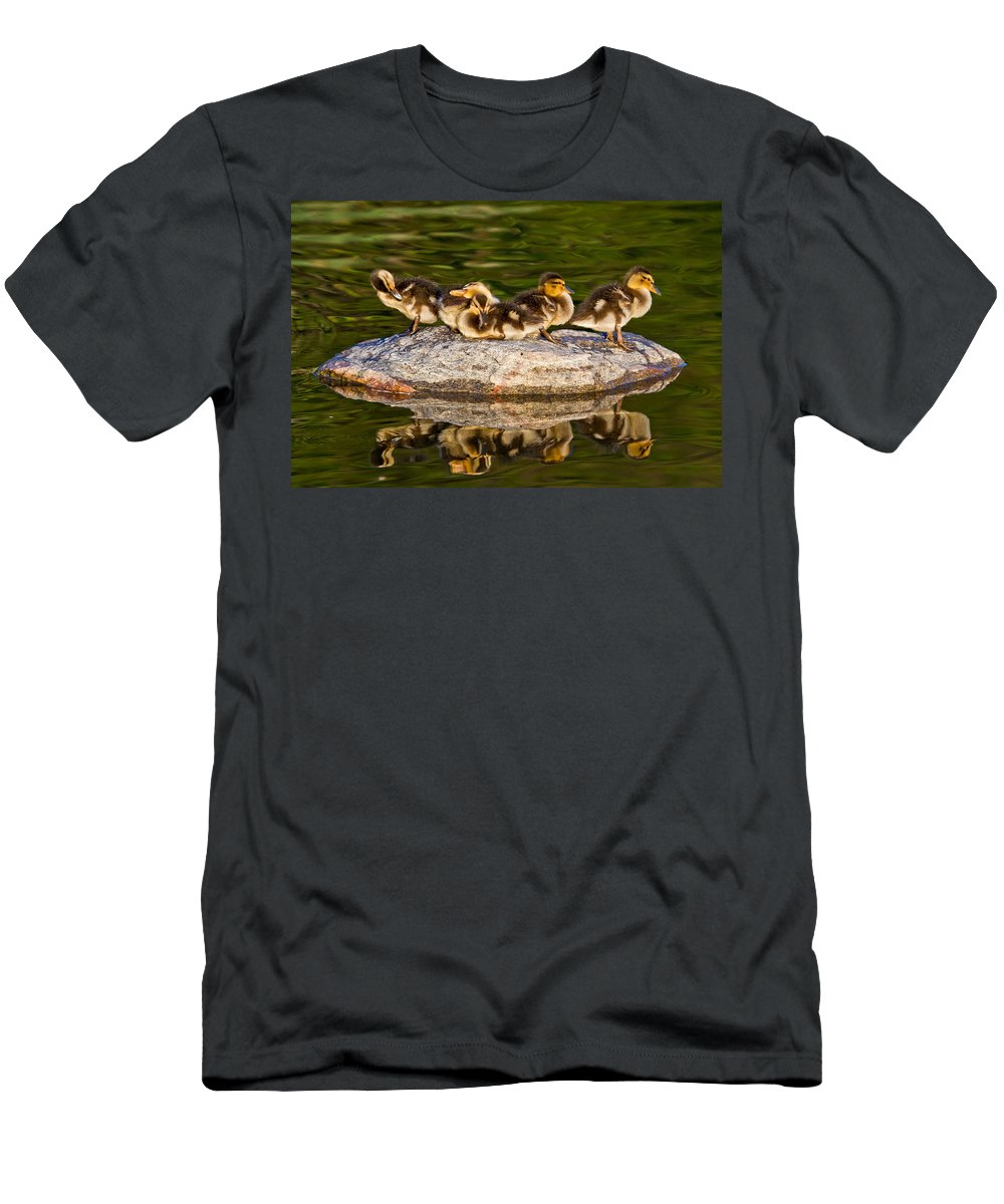 Duck Men's T-Shirt (Athletic Fit) featuring the photograph Ducklings Catch Some Rays by Bill Lindsay