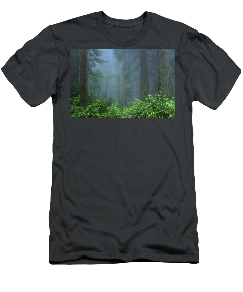 California Men's T-Shirt (Athletic Fit) featuring the photograph Early Morning In The Forest, Humboldt by Bilderbuch