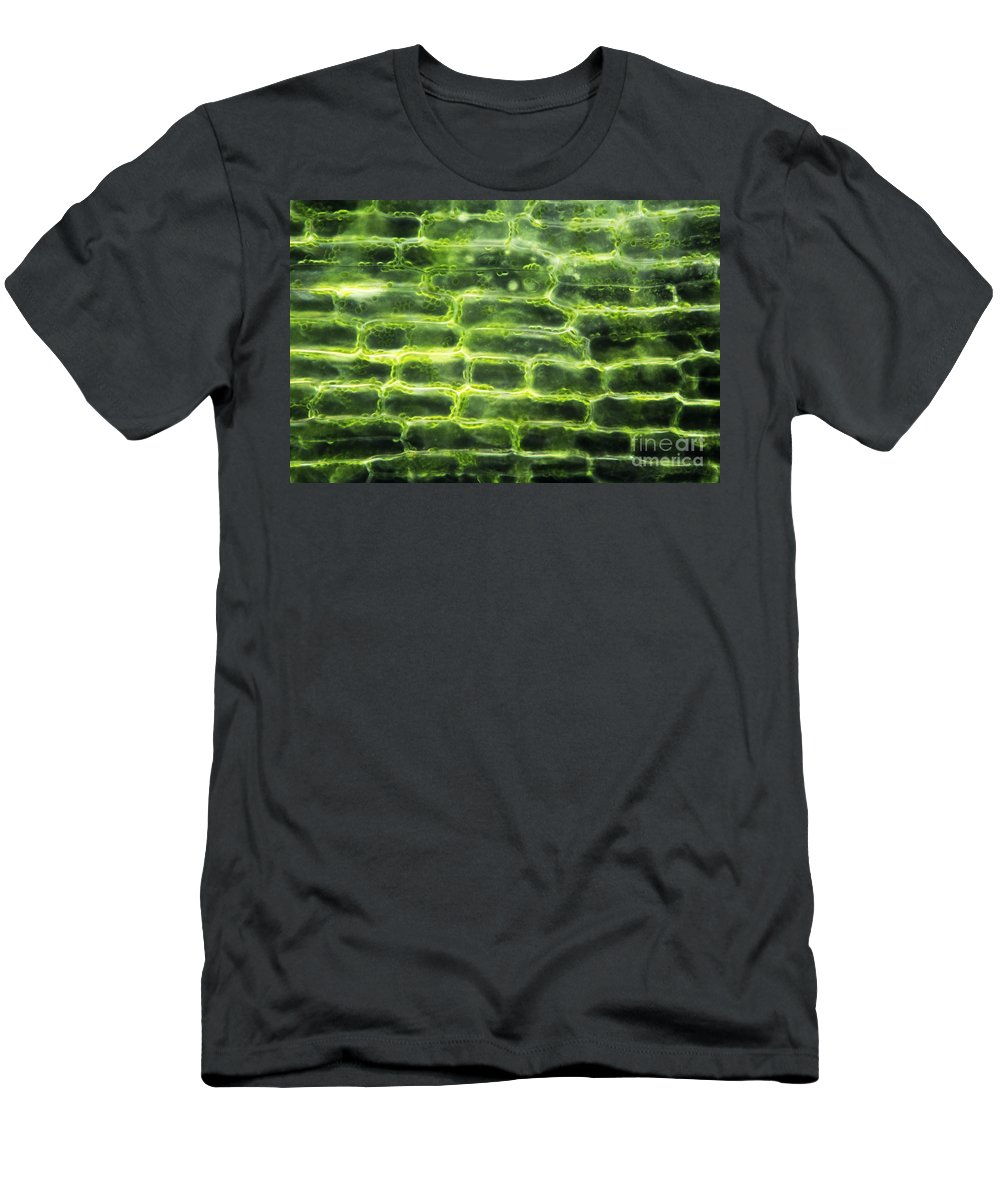 Elodea Men's T-Shirt (Athletic Fit) featuring the photograph Elodea Leaf by M. I. Walker