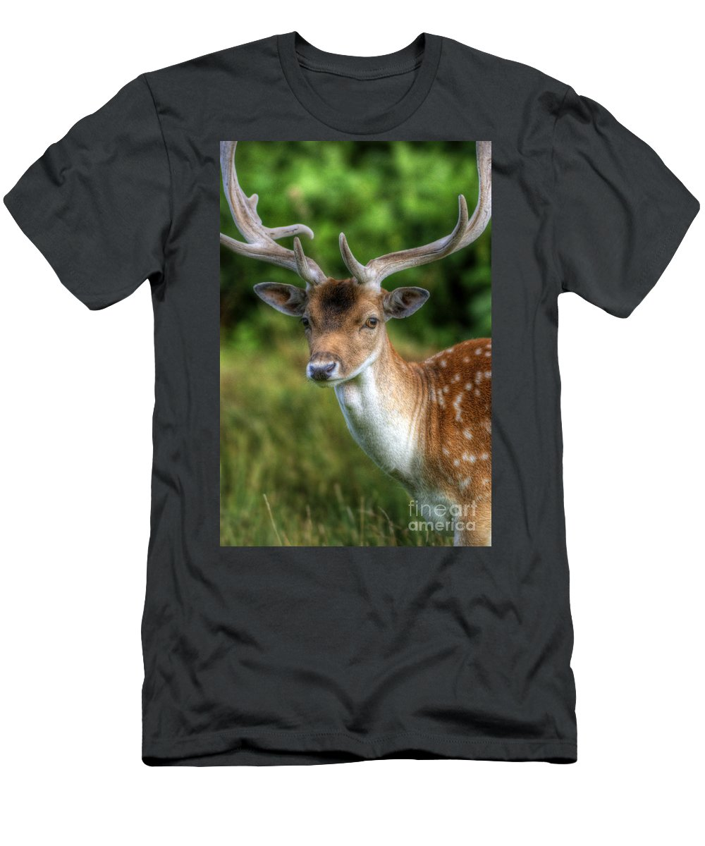 Deer Men's T-Shirt (Athletic Fit) featuring the photograph Fallow Deer by Yhun Suarez