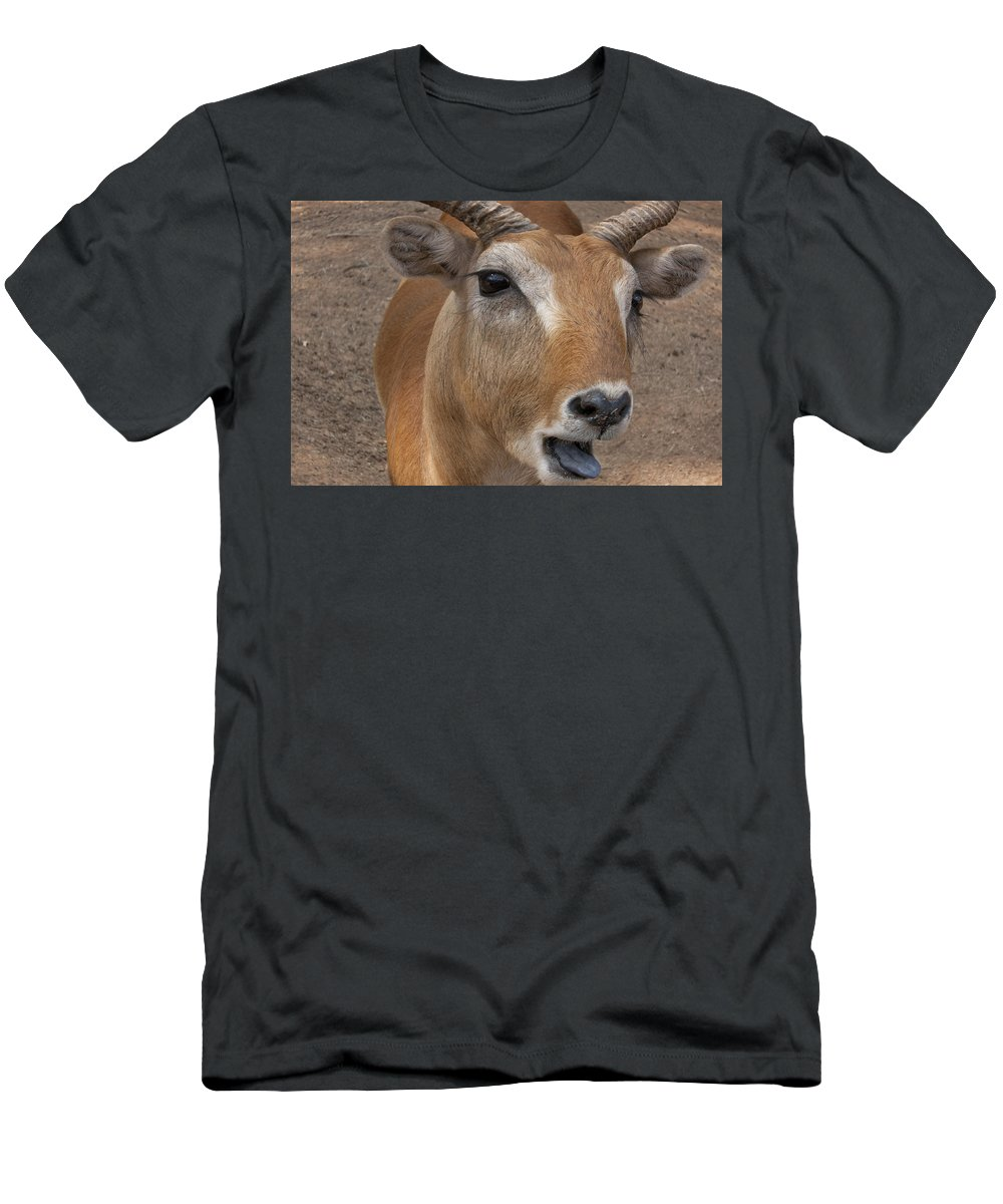 Antelope Men's T-Shirt (Athletic Fit) featuring the photograph Flabbergasted by Douglas Barnard