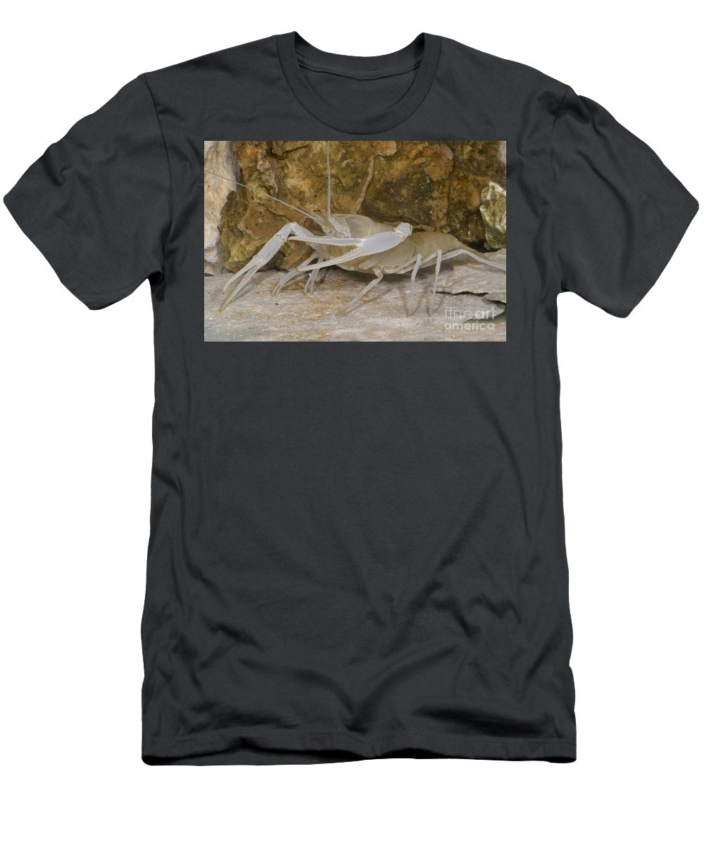 Stygobitic Men's T-Shirt (Athletic Fit) featuring the photograph Florida Cave Crayfish by Dante Fenolio