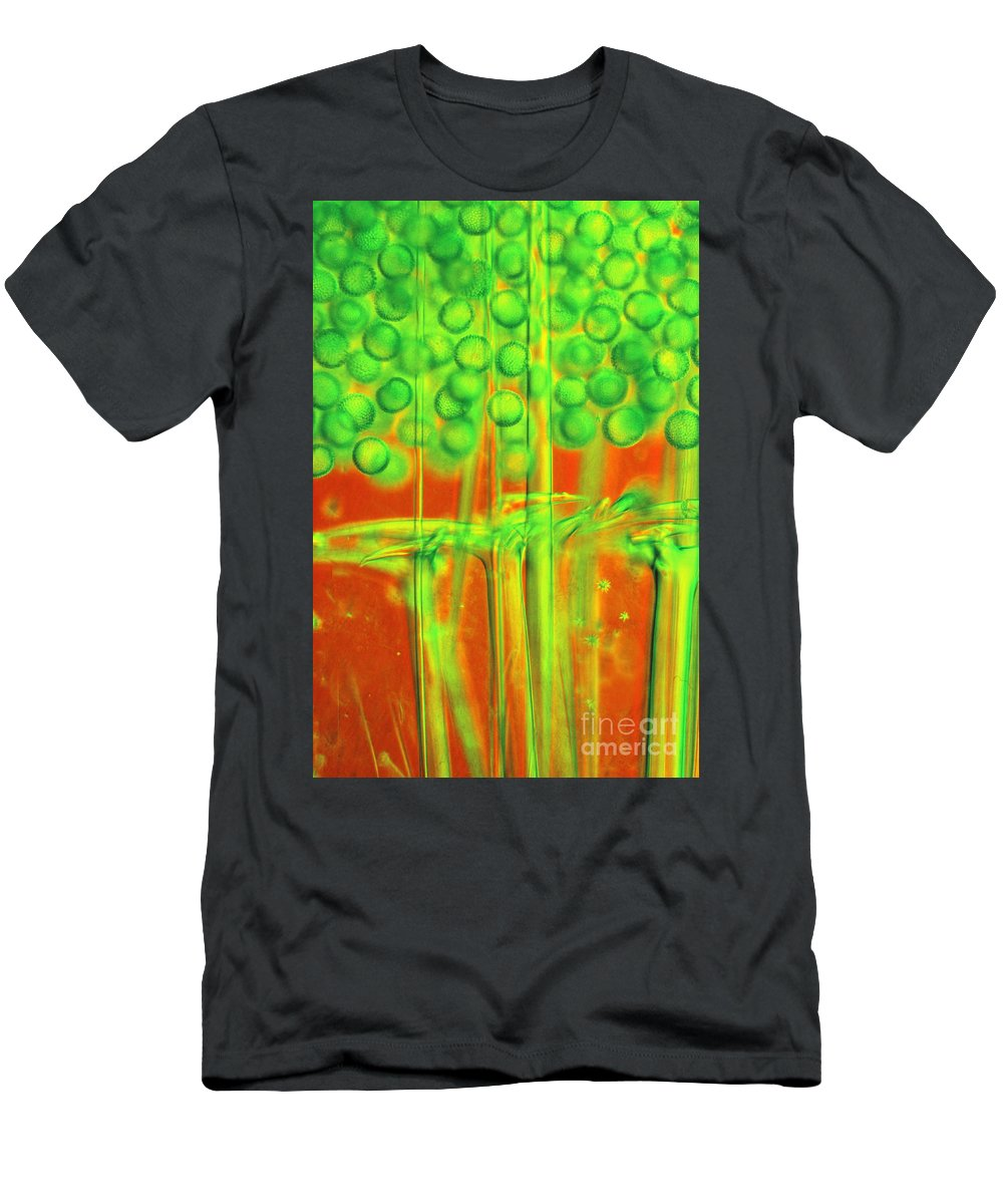 Light Microscopy Men's T-Shirt (Athletic Fit) featuring the photograph Geodia by M I Walker