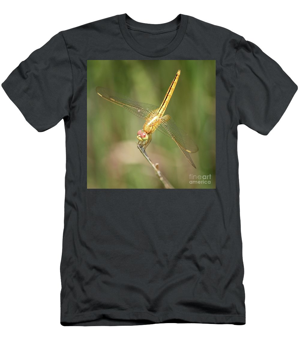 Dragonfly Men's T-Shirt (Athletic Fit) featuring the photograph Golden Glow In The Marsh by Carol Groenen