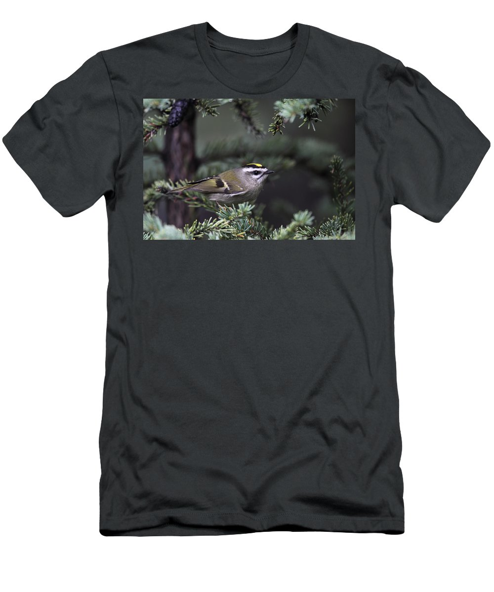 Doug Lloyd Men's T-Shirt (Athletic Fit) featuring the photograph Goldencrowned Kinglet by Doug Lloyd