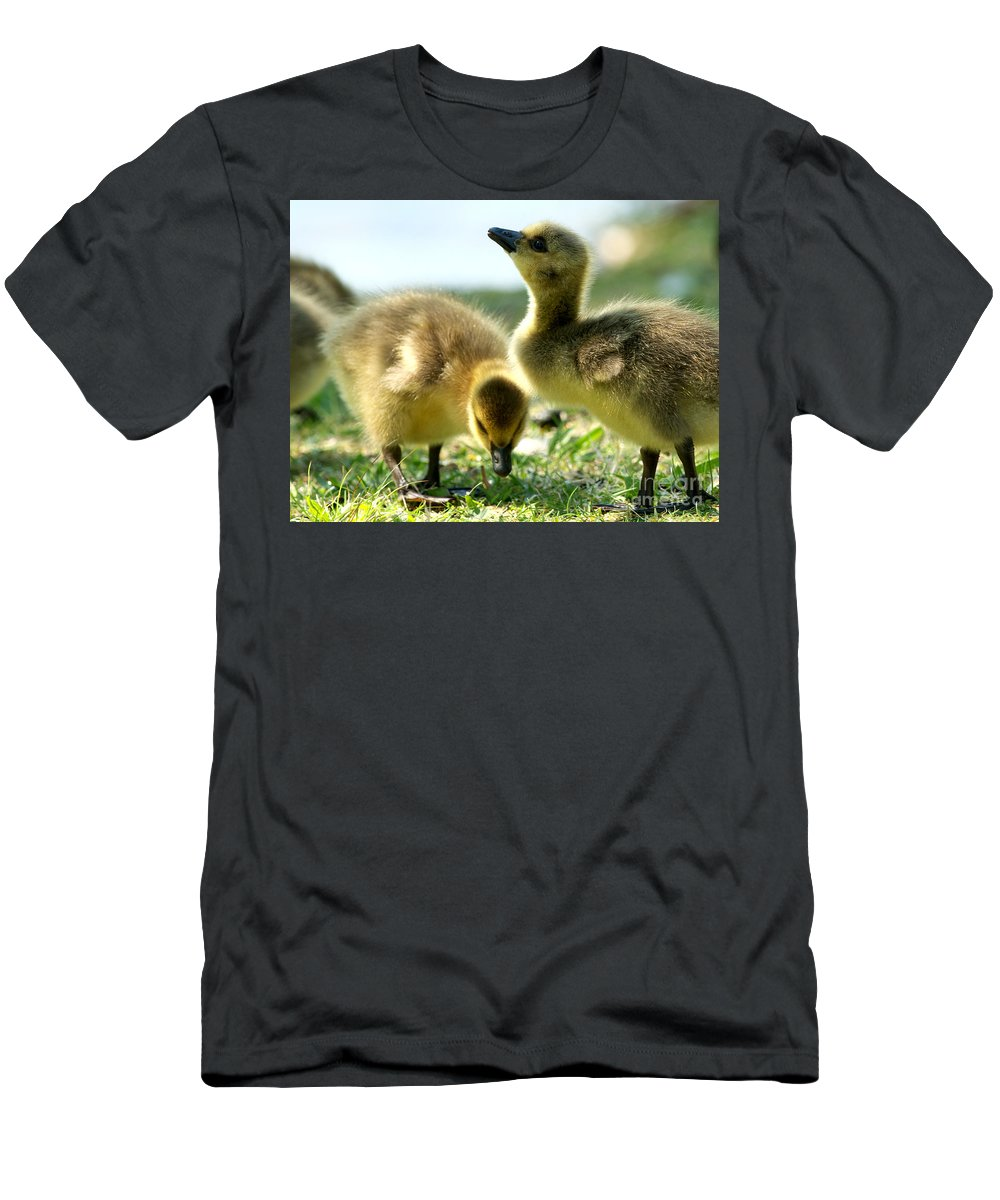 Canada Geese Men's T-Shirt (Athletic Fit) featuring the photograph Goslings 6 by Sharon Talson