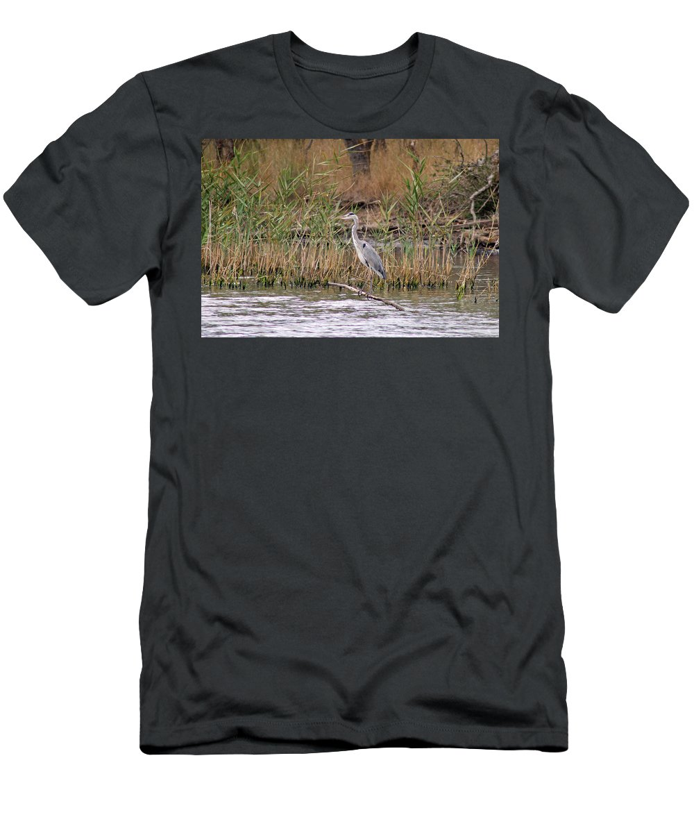 Birds Men's T-Shirt (Athletic Fit) featuring the photograph Grey Heron by Tony Murtagh