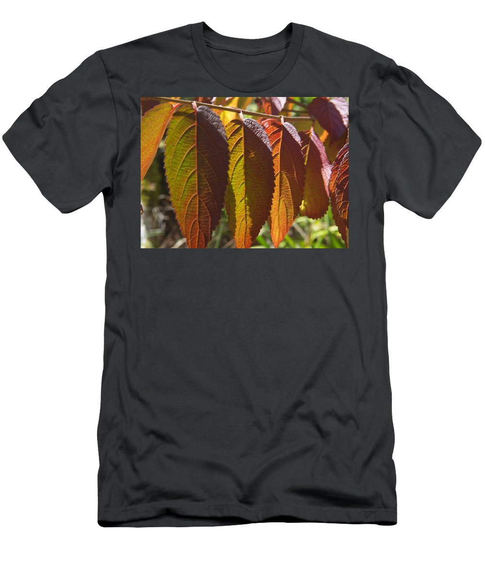 Fall Leaves Men's T-Shirt (Athletic Fit) featuring the photograph Hanging Out To Dry No. 1 by Belinda Greb