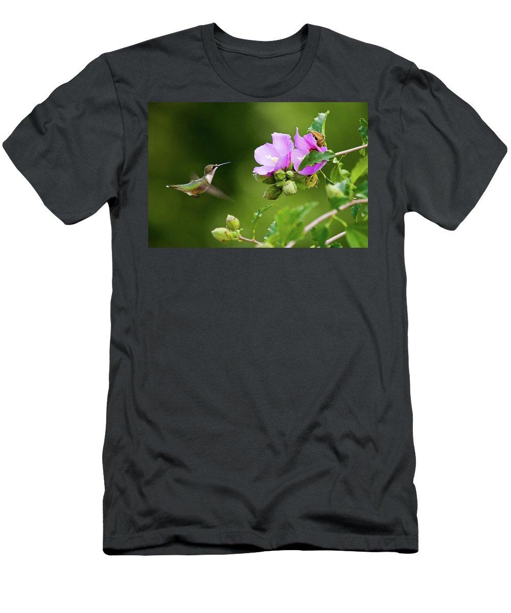 Hummingbird Men's T-Shirt (Athletic Fit) featuring the photograph Hummingbird Delight by Steve Stuller