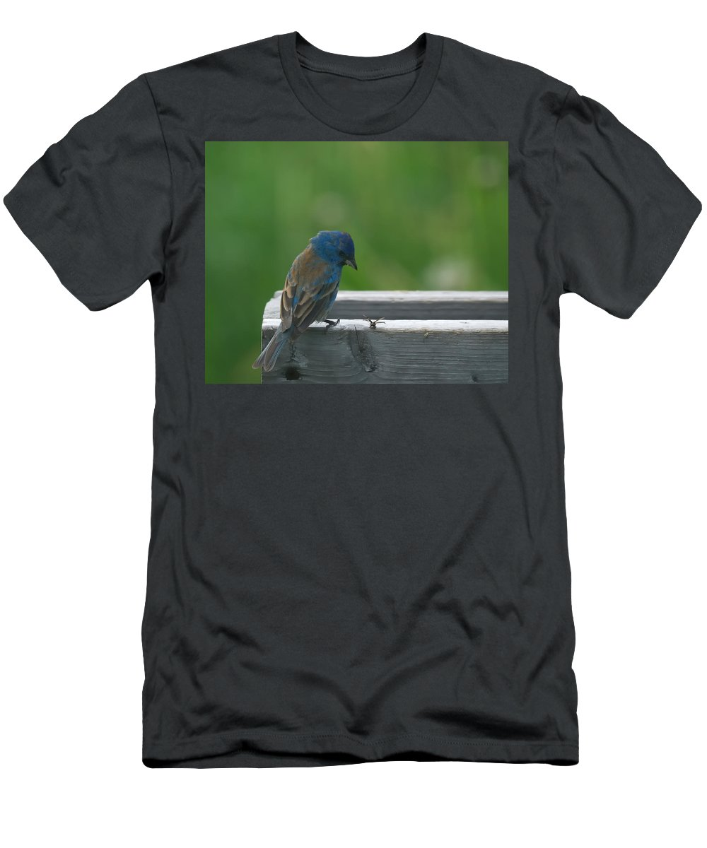 Indigo Bunting Men's T-Shirt (Athletic Fit) featuring the photograph Indigo Bunting And Friend by Susan Capuano