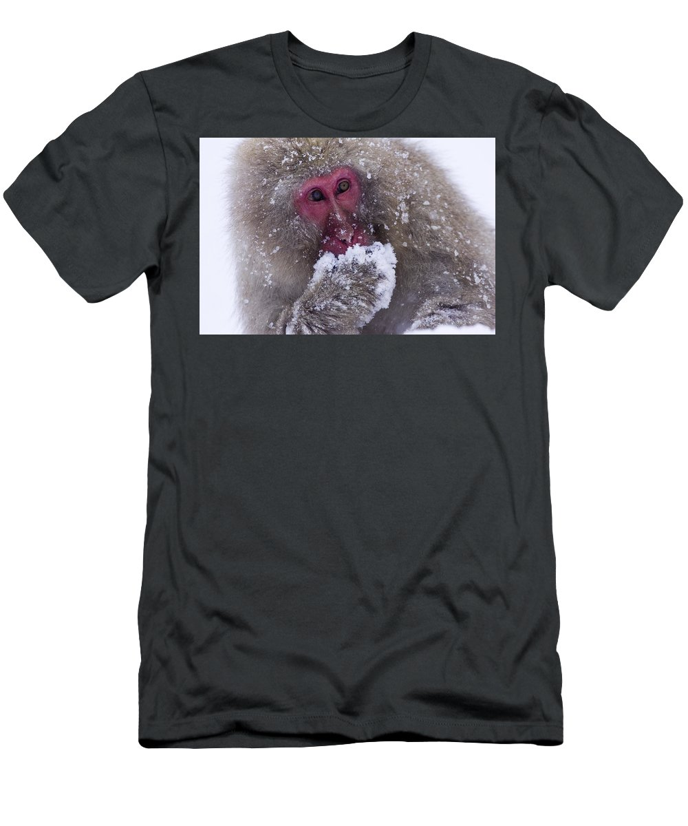 Winter Men's T-Shirt (Athletic Fit) featuring the photograph Japanese Snow Monkey by Natural Selection Anita Weiner