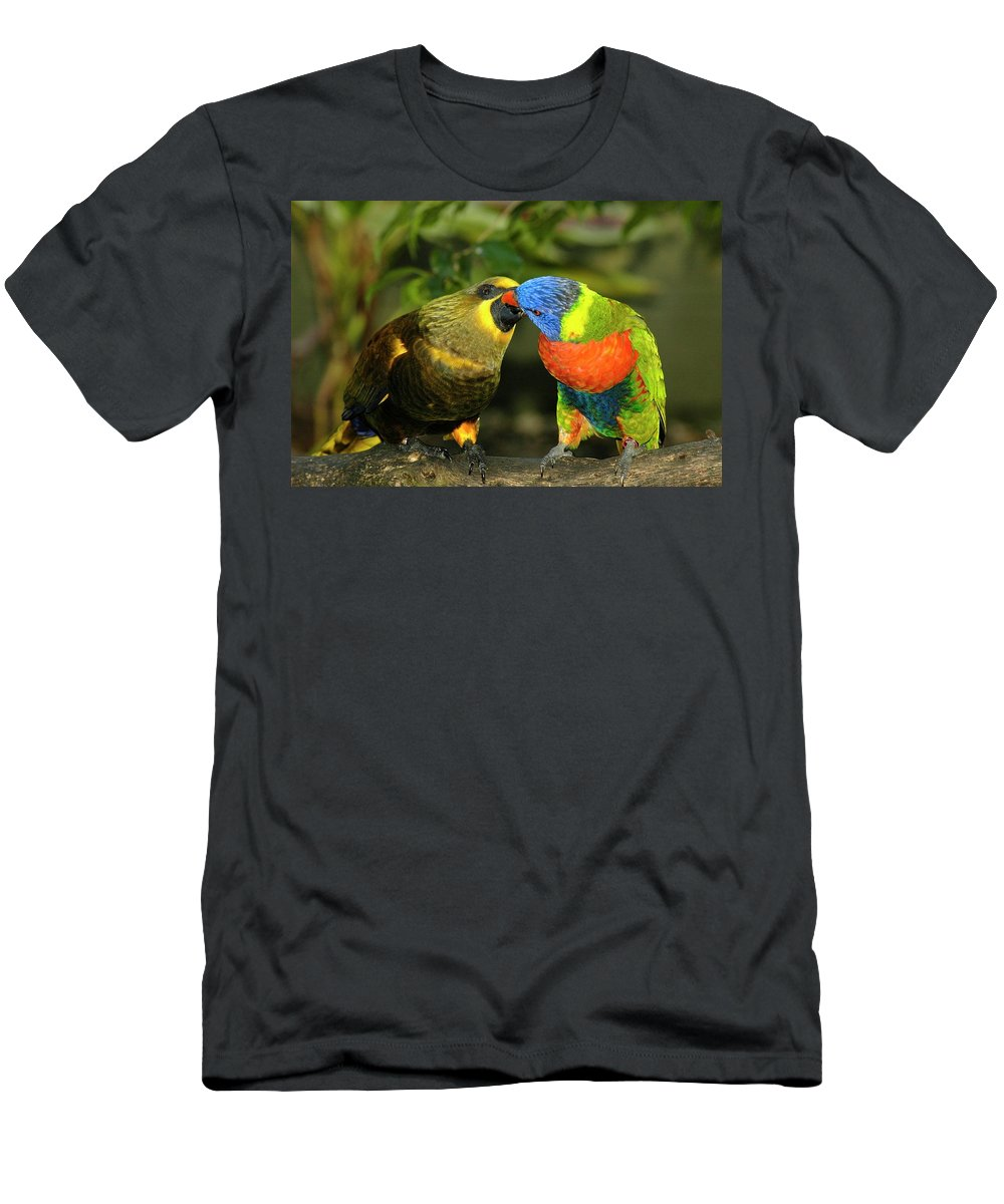 Lorikeet Men's T-Shirt (Athletic Fit) featuring the photograph Kissing Birds by Carolyn Marshall