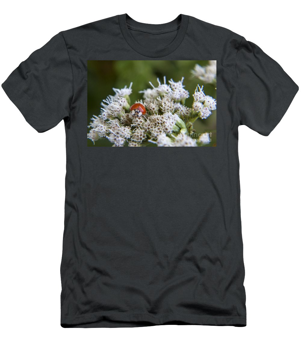 Ladybug Men's T-Shirt (Athletic Fit) featuring the photograph Ladybug Atop The Flowers by Darleen Stry