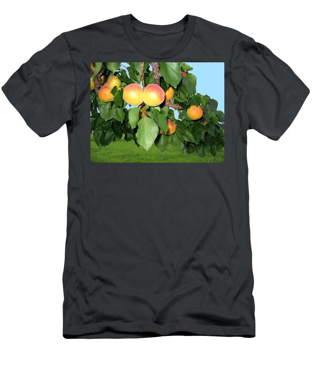 Apricots Men's T-Shirt (Athletic Fit) featuring the photograph Lake Country Apricots by Will Borden