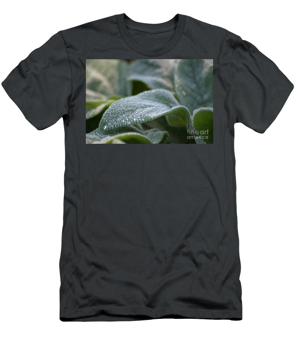Green Men's T-Shirt (Athletic Fit) featuring the photograph Lamb's Ear by Living Color Photography Lorraine Lynch