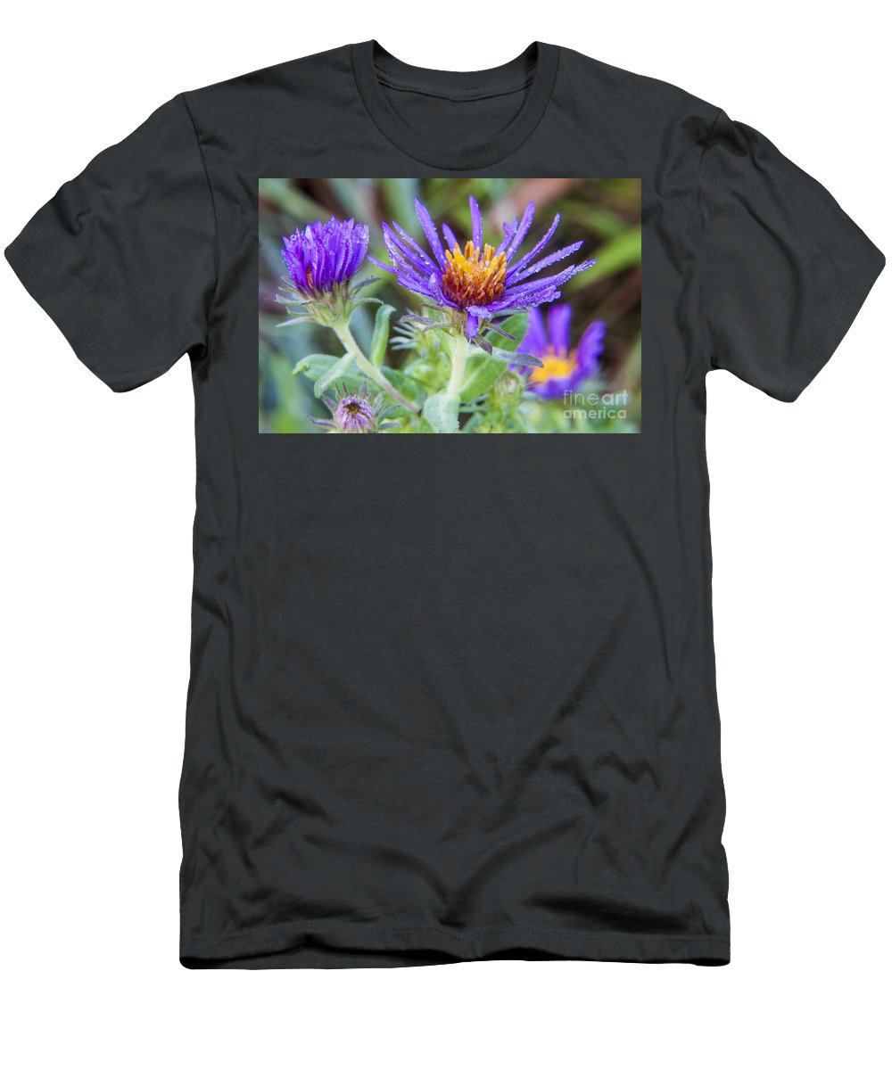 Fleabane Men's T-Shirt (Athletic Fit) featuring the photograph late Summer Fleabane by Darleen Stry